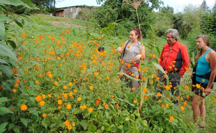 Visite de fr d ric bosqu de tera au jardin en mouvement for Jardin permaculture 2015